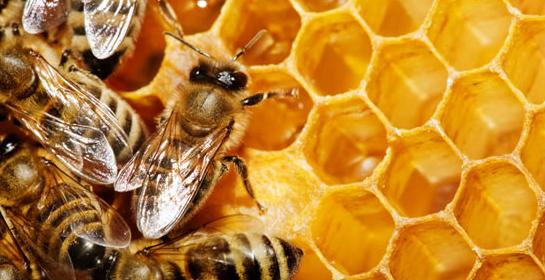 Снимки на пчели