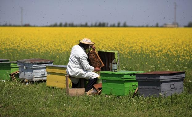 4,4 милиона лева ще бъдат отпуснати по Националната програма за пчеларство през 2015 година