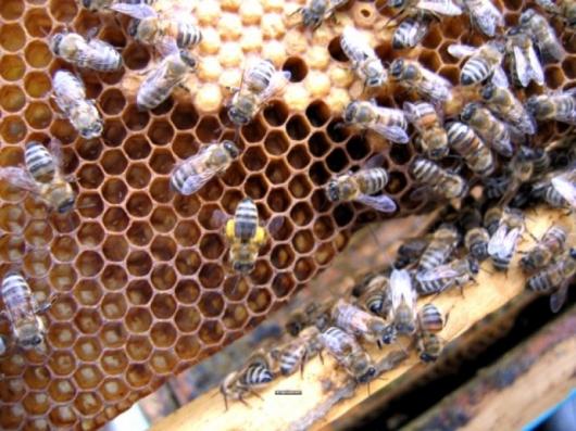 Националната програма за пчеларство през 2015 година