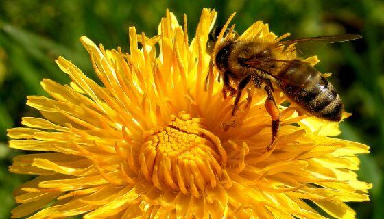 """Малки градчета в САЩ се обявяват за """"пчелни градове"""""""