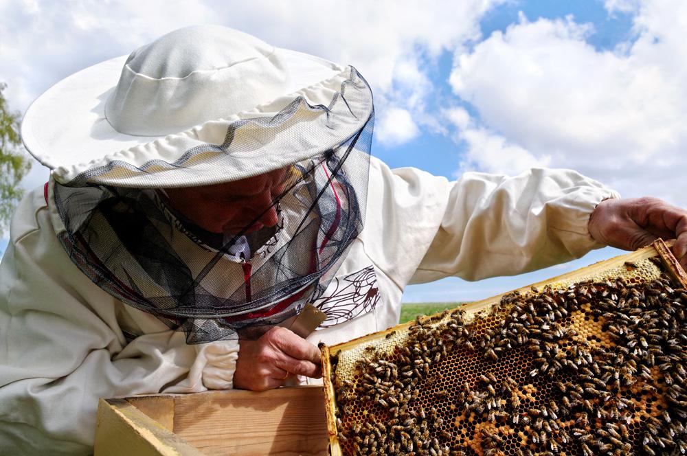 Международно изложение по пчеларство 2015