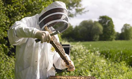 Националната пчеларска програма