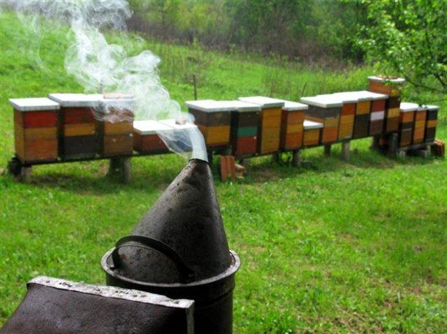 От 21-и ноември приемат документи по пчеларската програма