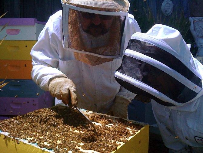 "Фонд ""Земеделие"" ще кредитира одобрени проекти по Пчеларската програма"