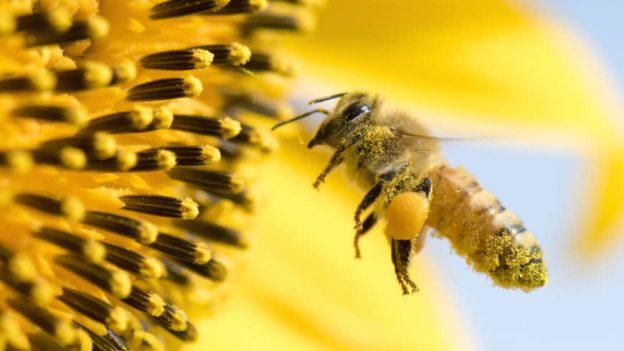 Пчелите - защо трябва да се грижим за тях и да ги запазим