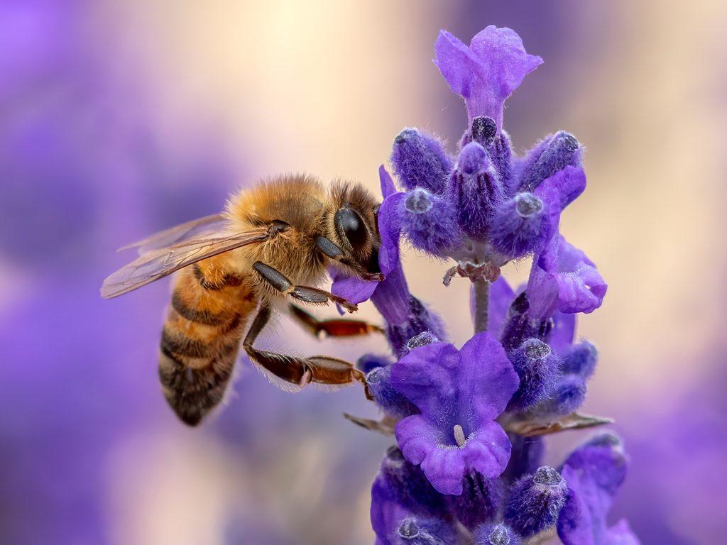 Основни фактори, които влияят на здравето на пчелите