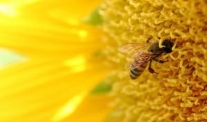 bee-gallery-1